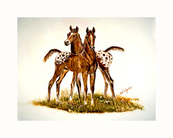 2 Appy foals 16x20 (55)