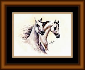 Galloping Greys