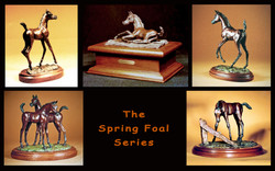 Spring Foal Series