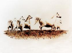 Run  mares 12x16ABCD