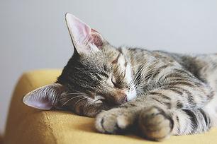 adorable-animal-cat-1440918.jpg