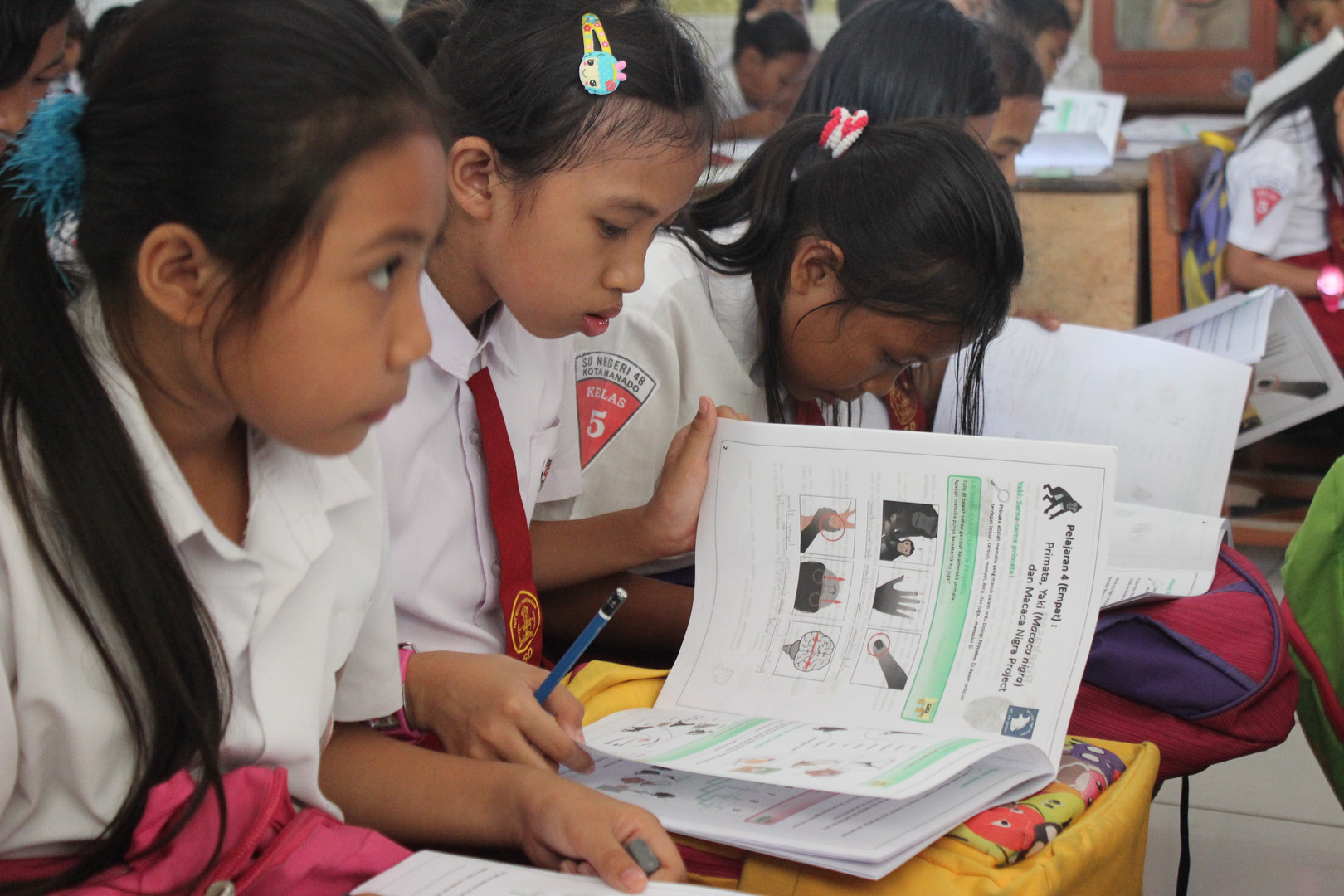 Schoolgirls read reading in our teaching material