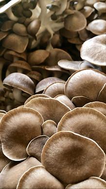 FF Blk Pearl King Oysters.jpg