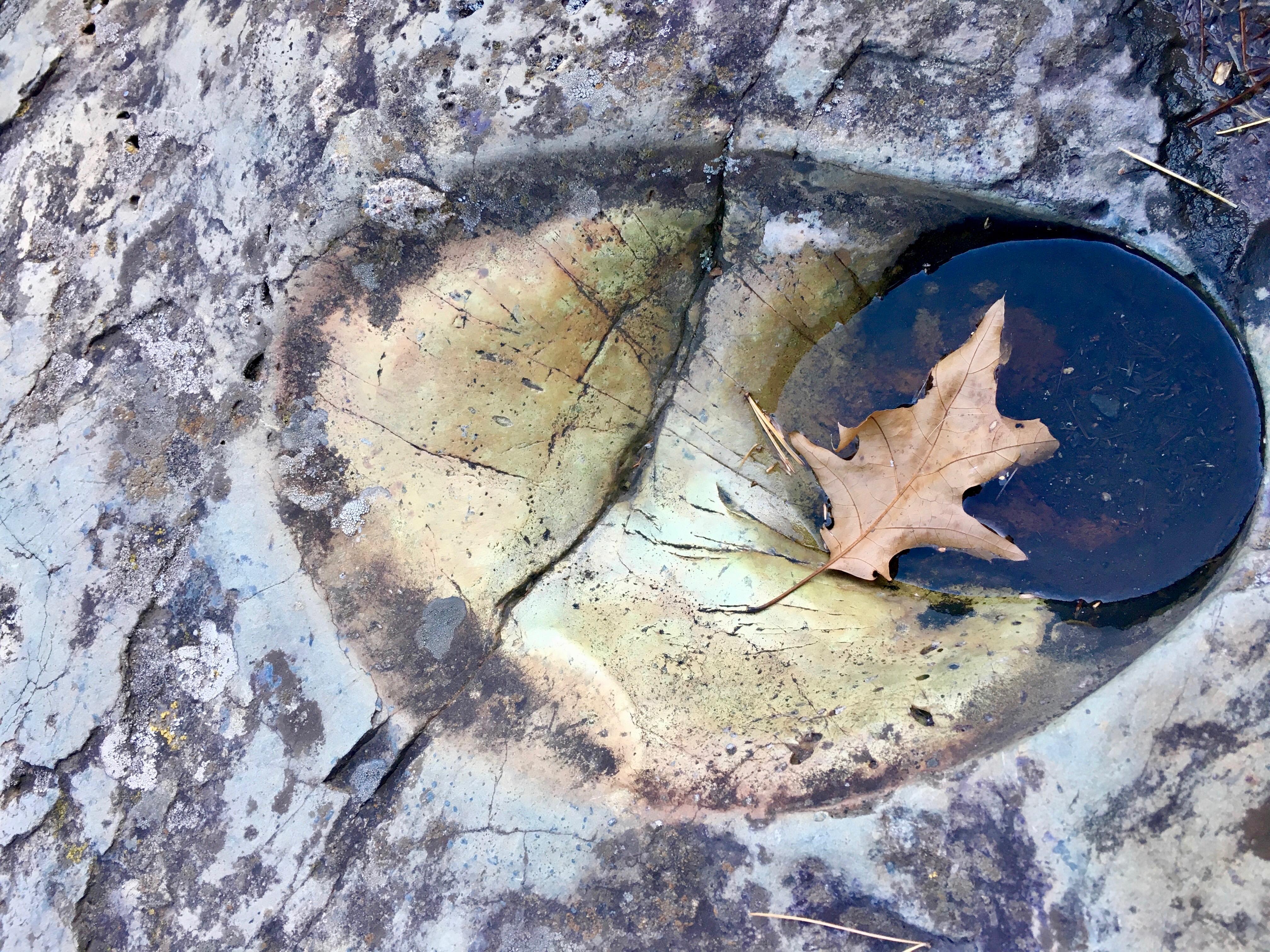 """Autumn's End"" Nature photography by local Tacoma artist Jennifer Preston Chushcoff."