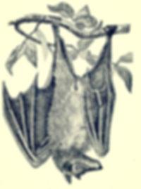 freaky bat at byjenn