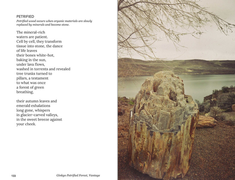 WA is Water Petrified poem
