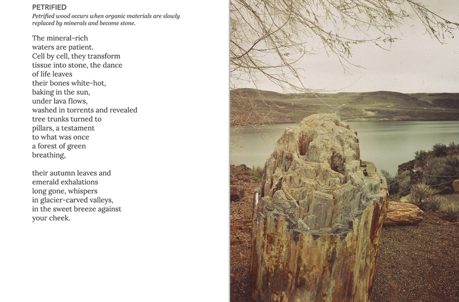 WA is Water Petrified poem