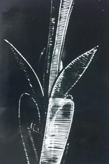 Ausschnitt einer gewebten Kette