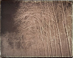 winter trees Marly.jpg