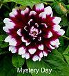 Mystery Day.jpg