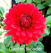 Garden Wonder.jpg