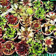 House Plants 4.jpg
