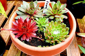House Plants 2.jpg