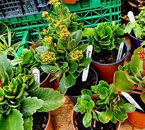 House Plants 3.jpg