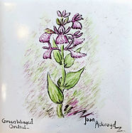 Green Winged Orchid.jpg