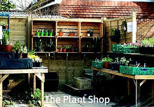 The Plant Shop.jpg