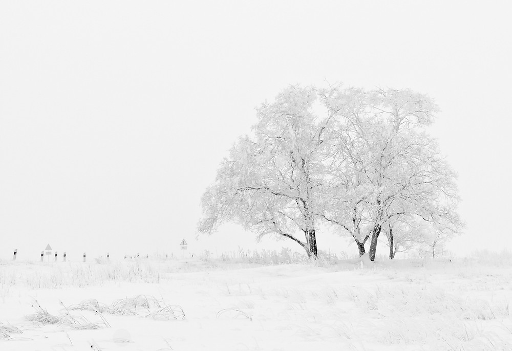 Field and tree with snow winter storm