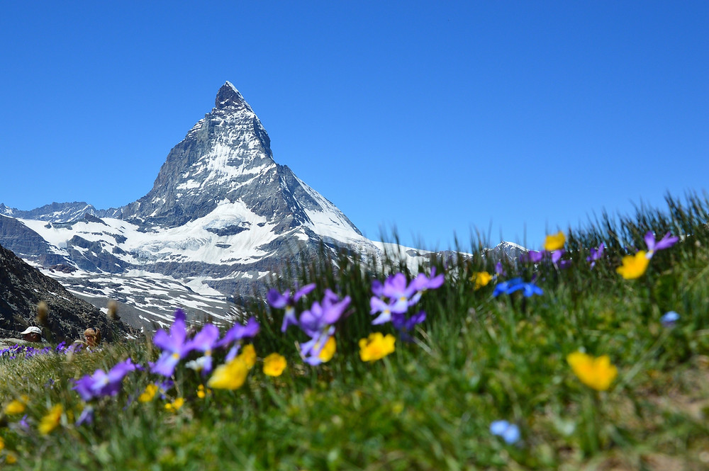 Alpine mountain with flowers and blue sky
