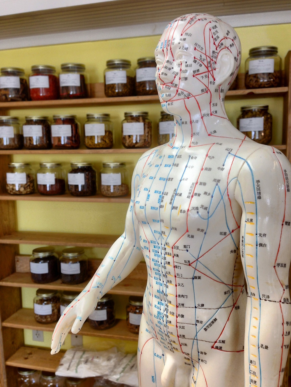 Acupuncture meridians Chinese herbs