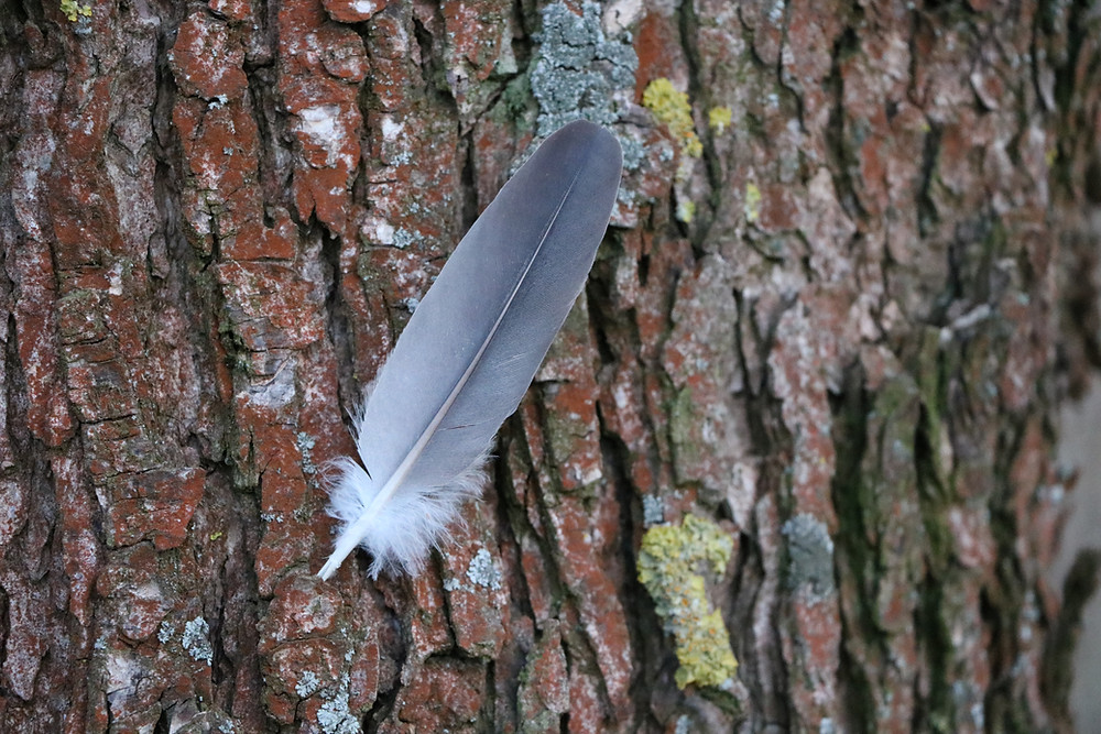 bird feather on tree trunk with moss