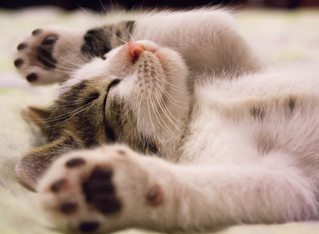 A Bit About Sleep and Chinese Medicine