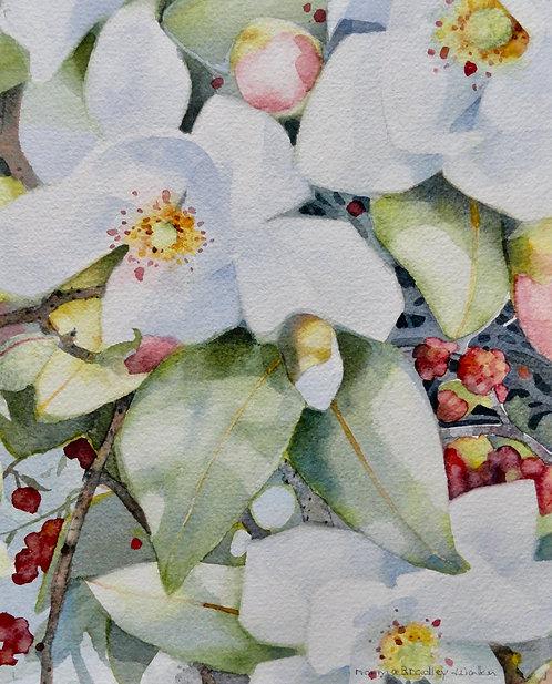 Magnolia and Berries