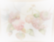 DSC00165_edited_edited.png