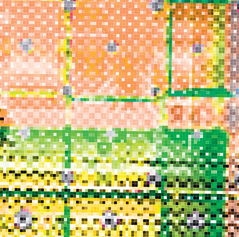 Gallinas Pattern Design--©2020 Adolfo Va