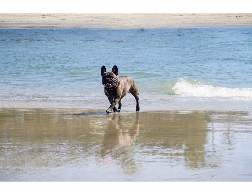 PBV Pet friendly beach.jpg
