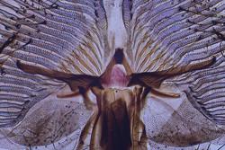 Proboscis of Blowfly