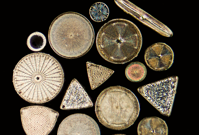 east diatoms 4.jpg