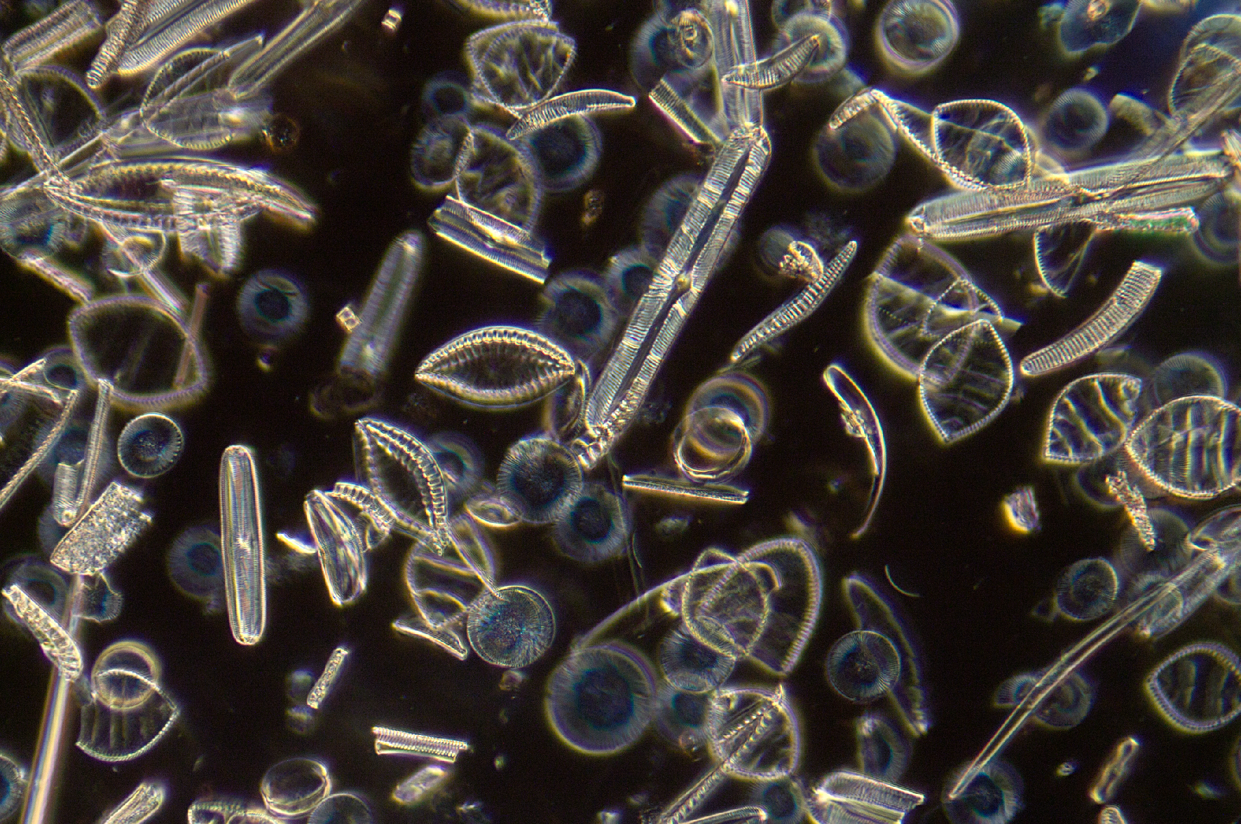 Diatom Strew Toome Bridge Barnett