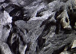 Asparagine Norman 1