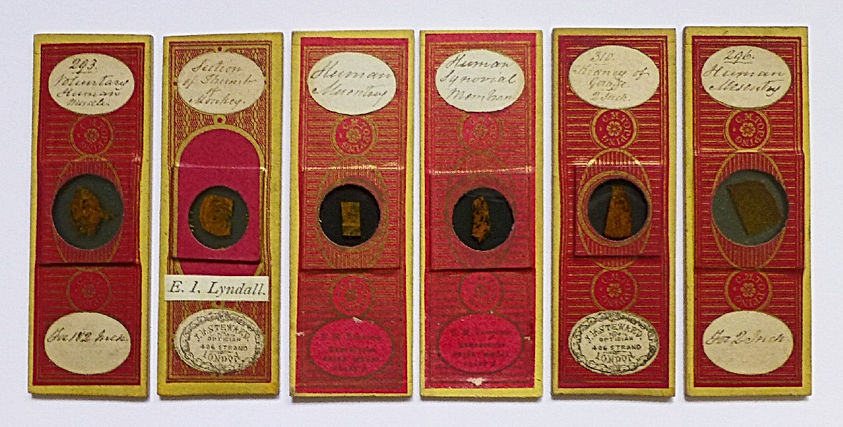 antique microscope slides