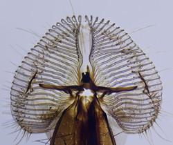 Blowfly Prob2