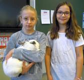 Kaninchen zu Gast