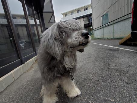 豊田市・みよし市のペットホテル「hotel hug&link(ホテルハグアンドリンク)」