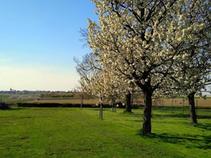 uitzicht op bloesems in onze boomgaard