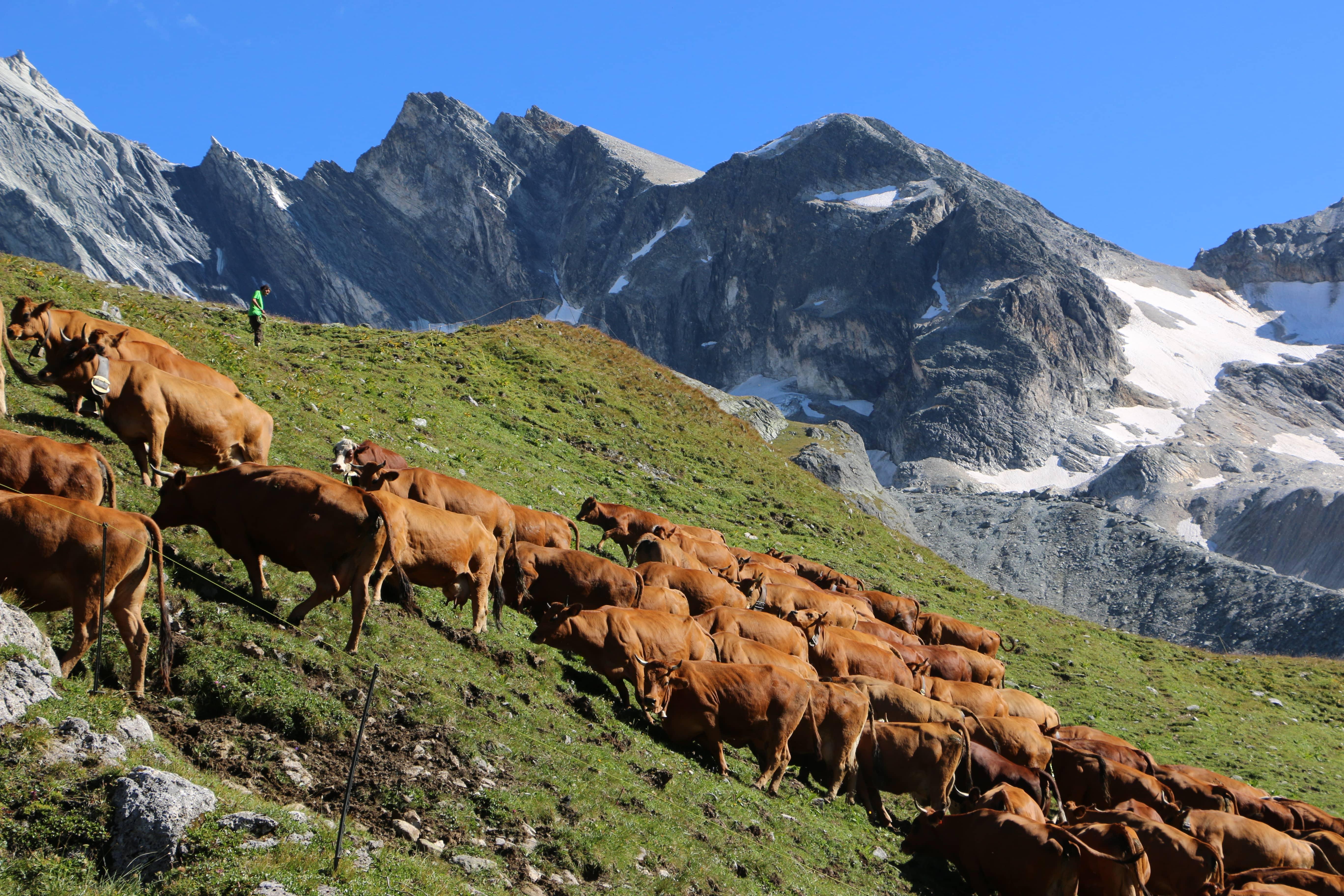 Gaël-Machet-Alpagiste-Alpage-du-Ritord-Maison-de-Savoie-Paris35