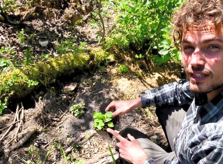 Video workshop: voedselbosrand in je tuin
