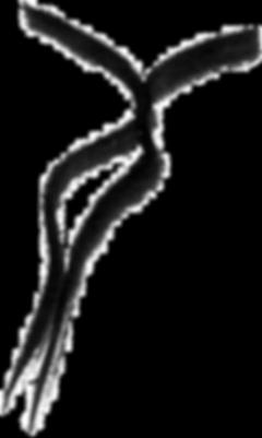 logo zwart transparant_edited.png