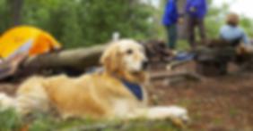 trail dog.png