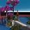 Thumbnail: Cerasus Avium Hub 614x614