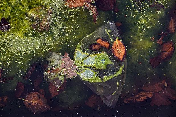 Clear Waters (11).JPG