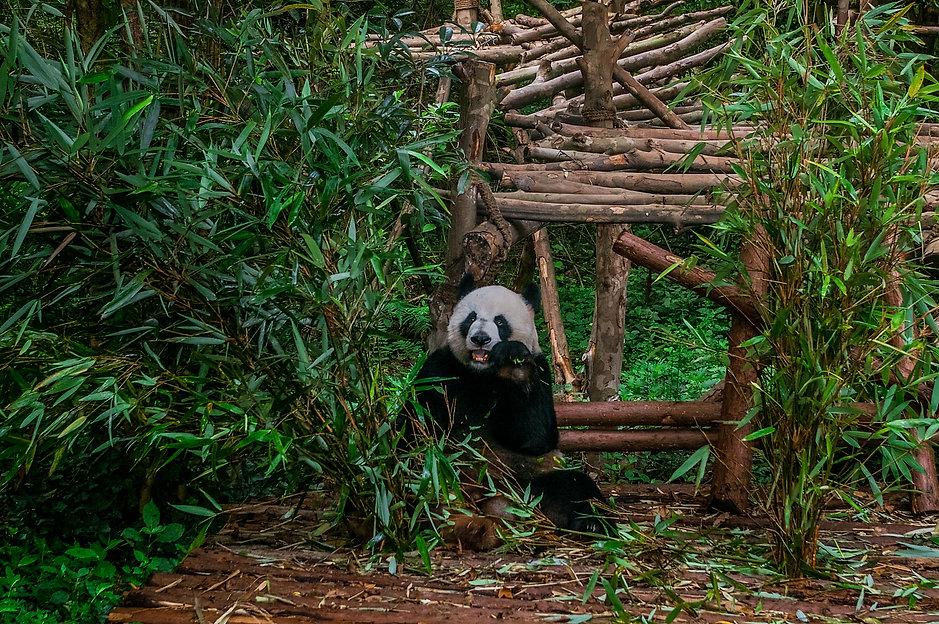 10 imprescindibles en CHINA