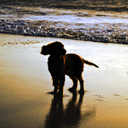 Riley Sun Set.jpg