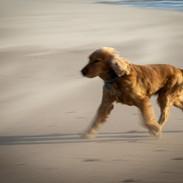 Riley Running.jpeg