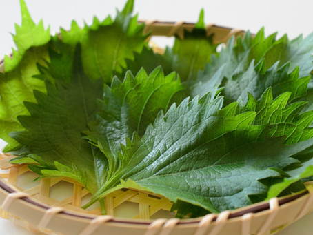 How To Eat and Cook with Shiso Leaves