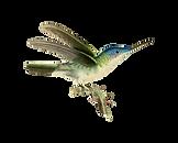 AzureCappedHummingbird_MrsPullig_Instruc
