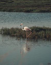 flamingo6 (1 de 1).jpg